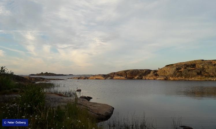 Tallinnamelonta 2018 5